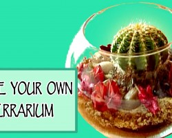 DIY ROOM DECOR ❤ Make your own terrarium!