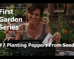 First Garden Series #7 Planting Peppers from Seed and Germinating Tip