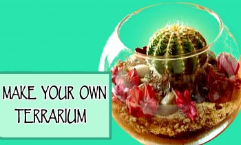 DIY ROOM DECOR ❤ Make your own terrarium!