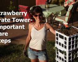 Strawberry Crate Tower – Important Care Steps