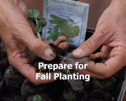 Plan Now For A Continual Harvest and Fall Planting