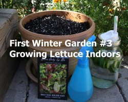 First Winter Garden Series #3: How to Grow Lettuce Indoors in the Winter