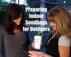 $10 Garden Series #7: How to Prepare Indoor Seedlings for Transplanting Outdoors