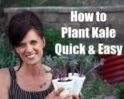 How to Plant Kale and Why to Plant it – Quick and Easy!