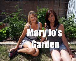 $10 Garden Series #11-  Mary Jo's Garden – You Won't Believe This – in 4K