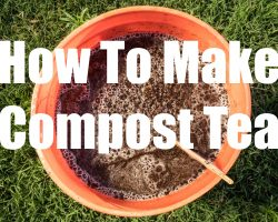 How to Make Compost Tea – Quick, Easy and FREE! – in 4K