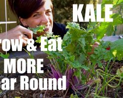 Growing Kale  – Tips on How to Grow & Eat More Year Round