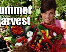 Organic Garden Summer Harvest – July, 2017