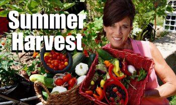 Organic Garden Summer Harvest – July, 2017