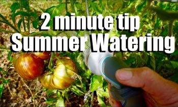 Watering Your Garden in the Summer to Beat the Heat: When, How & How Often // CaliKim 2 Minute Tip