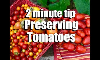 Tomatoes: 2 Quick Ways to Preserve Lots of Tomatoes-Freezing & Oven Drying // CaliKim 2 Minute Tip