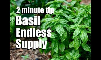 Basil: How to Have an Endless Supply by Pruning and Propagating  // CaliKim 2 Minute Tip