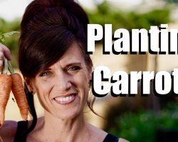 Planting Carrot Seeds in a Container with DIY Potting Mix  // $10 Garden Series #3, Season 2
