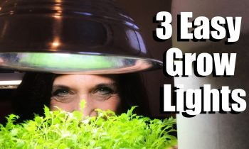 3 Easy Grow Light Set Ups for Starting Vegetable Seeds Indoors & Lumens and Kelvin Explained