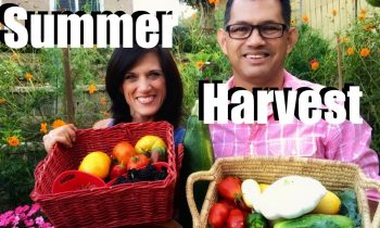 Organic Garden Summer Harvest – Let's Get Dinner!