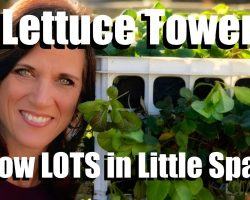 Planting a Lettuce Tower – Grow a Lot in a Little Space