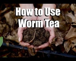 Using Worm Tea in Your Garden – What, Why, How  //  Feeding Your Garden #2