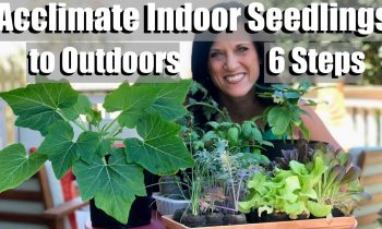 Acclimating Indoor Seedlings to Outdoors (Hardening Off) in 6 Easy Steps / Spring Garden Series #4