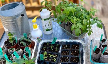 3 Watering/Fertilizing Mistskes NOT to Make When Starting Seeds Indoors & LIVE Q & A